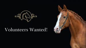 Volunteers wanted image with a chestnut horse